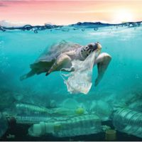 Major Distributors Take a Cue to Curb Plastic Pollution